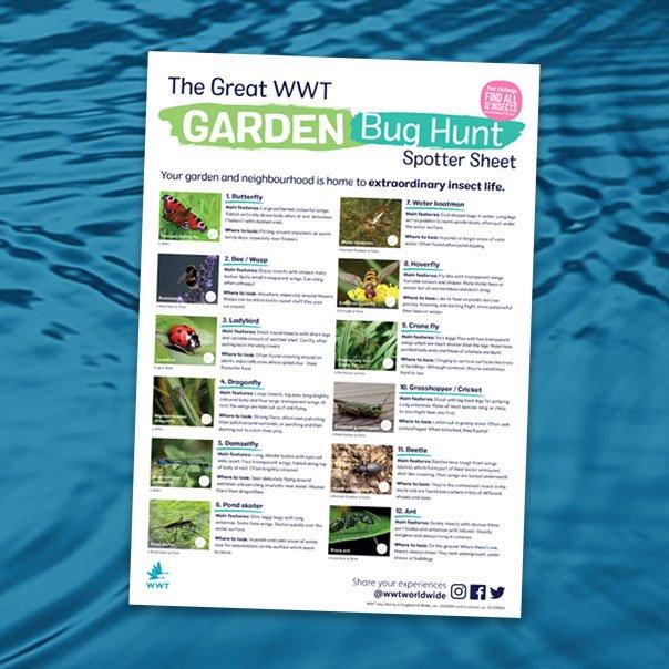 bite_size_activity_thumb_garden_bug_hunt_604x604
