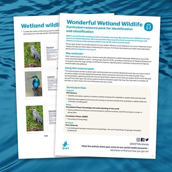 resource_pack_thumb_wonderful_wetland_wildlife_604x604